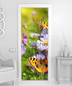 Бабочки шоколадницы на цветах