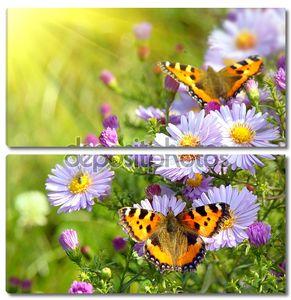 две бабочки на цветах