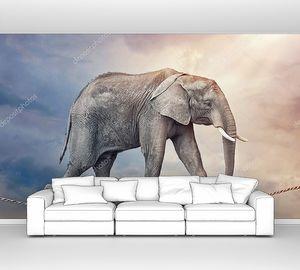 Слон ходит по канату