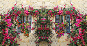 Окна, увитые цветами, на старой улочке