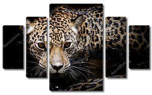 Ягуар на черном фоне