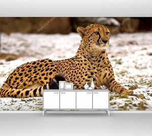 Гепард на снегу