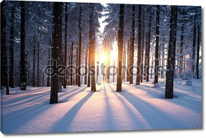 Закат в лес зимой