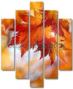 Осенний клен листья в размытым фоном