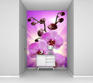 Розовая орхидея в лучах солнца