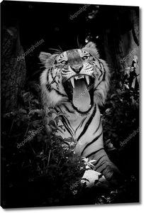 крупным планом лицо тигра, изолированные на черном фоне