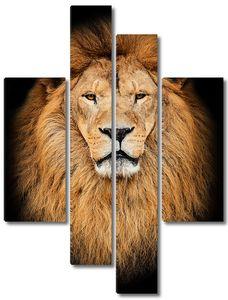 Портрет Африканского льва на черном