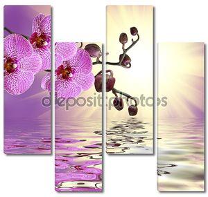 Розовая орхидея над водой