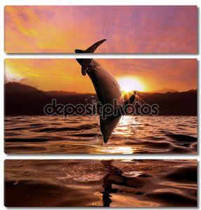 Закат на море и Дельфин прыжки с поверхности воды