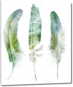 Акварель, перья на белом фоне