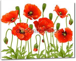 Весенние цветы: мака