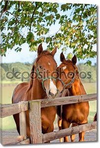 Две лошади в загоне