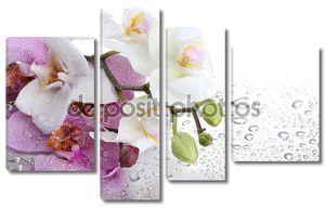 Орхидеи разных цветов