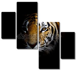 фон тигра