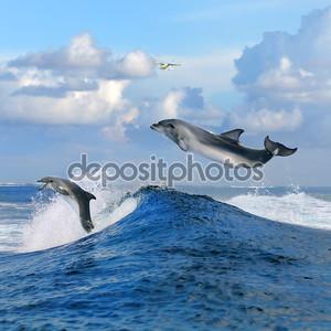 С видом на океан и двух дельфинов прыгать с вьющимися волны