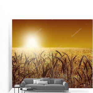 Пшеничное поле на красивом закате