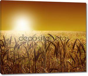 Пшеничное поле в закате