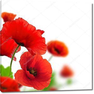 Весенние цветы - Маки