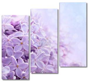 Просто цветения сиреневые цветы. Абстрактный фон. Макро фото