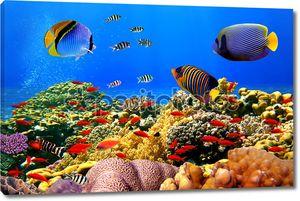 Фотография коралловой колонии на рифе в Египте