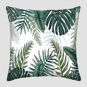 Листья разных пальм