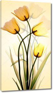 Желтые  полупрозрачные тюльпаны