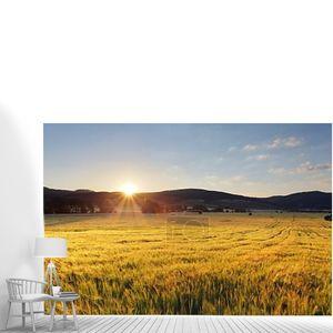Пшеничное поле с солнцем