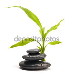 Стек из камней и зеленый лист