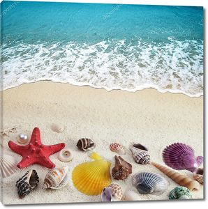 Морские раковины на песчаном пляже