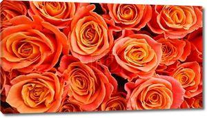 Фон оранжевых роз