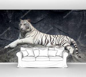 Белый тигр лежит на скале