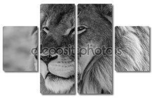 король льва дикой местности