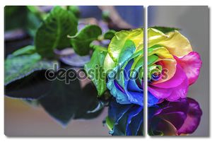 радужная роза отражения