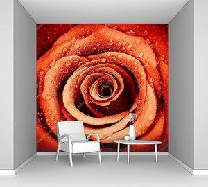 свежий цветок с каплями росы