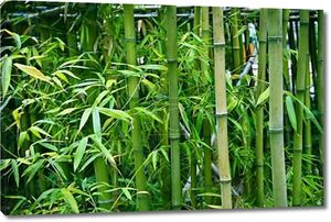 Бамбуковый лес в Китае