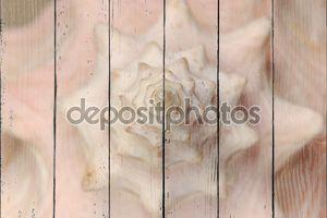 Раковина шпиль абстрактный Природные текстуры