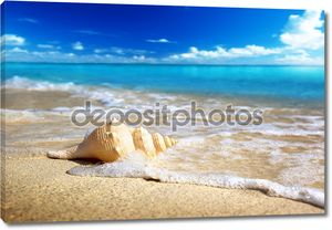 Раковина на пляже (мелкой DOF)
