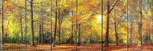 Великолепная Осенняя панорама Солнечный лес