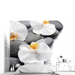 Красивые цветы орхидеи на камнях