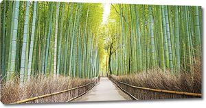 Сквозь бамбуковую рощу
