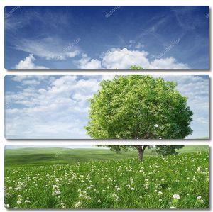 Летнее дерево в цветущем поле