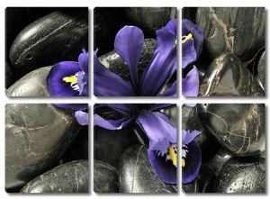 Весна Ирис в камни