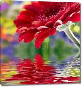 Крупным планом красных герберы ромашки отражение в воде