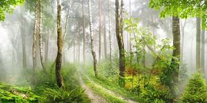 Дорожка через солнечный лес