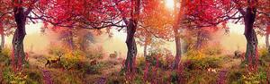 Лес осенним днем