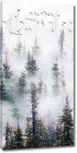 Хвойный лес в тумане