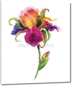 Вітальна листівка з днем народження з аквареллю Ірис квітка