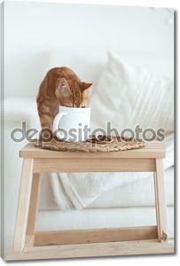 Кот с молочником