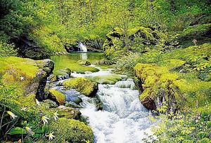 Ручей с лесным озером