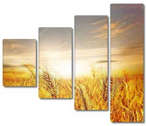 Пшеничное поле и восходящее солнце